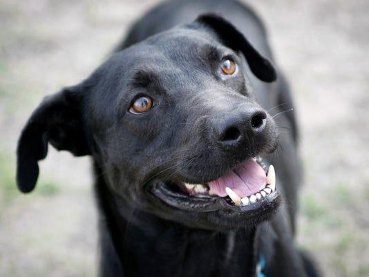 Pets Black Dog Syndrome