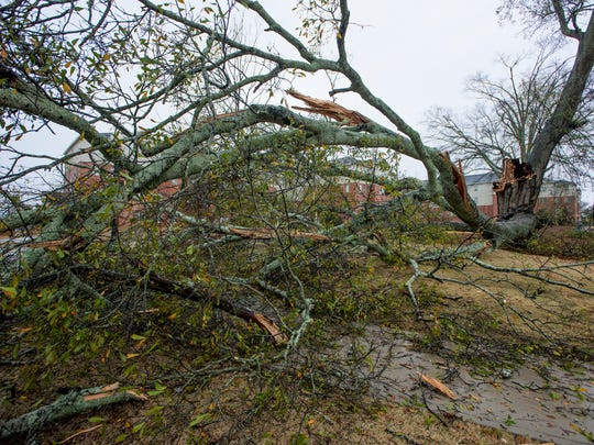 A tree downed by the Saturday morning storm blocks a sidewalk on the Troy University campus in Troy, Ala. on Saturday January 21, 2017.