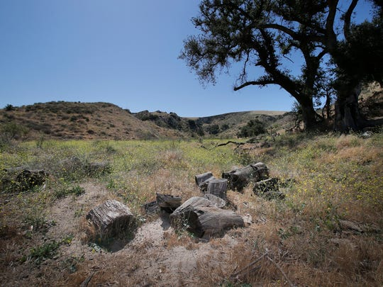 This wooded area with oak trees sits on the newly acquired property that Allied Pacific Studios has leased from Waste Management. Allied Pacific Studios hope to entice movie companies to bring their film productions to the Simi Valley area. With about 1,000 acres the property offers rolling hills and cliff areas.