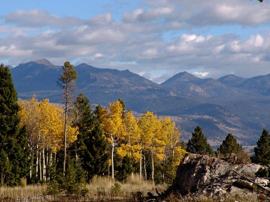 Fall foliage in Yellowstone National Park is plentiful in the Mammoth Hot Springs area.