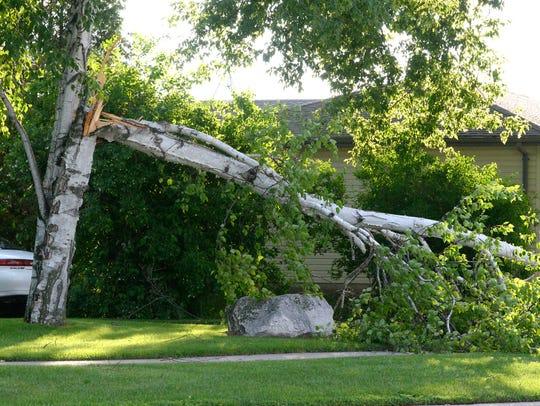 A section of a tree broke off across a sidewalk along