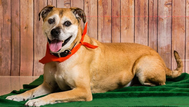 Bingo is a dapper older gentleman who knows the value of a cozy bed. He's laid-back and absolutely loves a good ear scratch. You can meet Bingo, along with other dogs and cats, any day of the week at Nevada Humane Society.