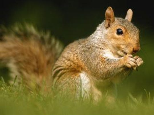 Squirrels knocked out power across the city of Neillsville