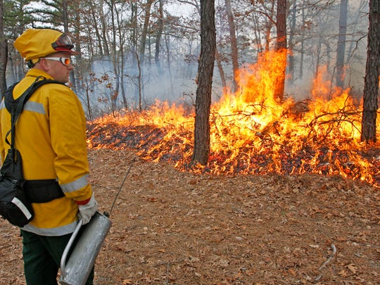 Will Jubert of the NJ Forest Fire Service moniters a prescribed burn after firing a control line in Barnegat Township.