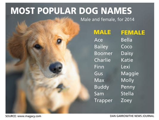 Delaware By The Numbers Most Popular Dog Names