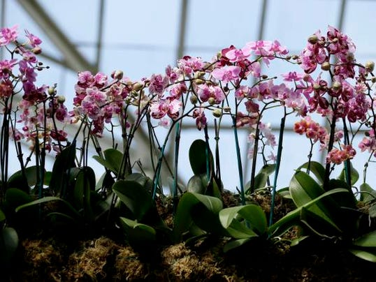 Botanical Gardens Orchid Show (10)