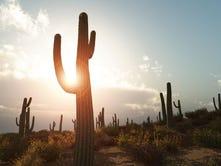 10 maneras de sobrevivir el calor de 100 grados en Arizona