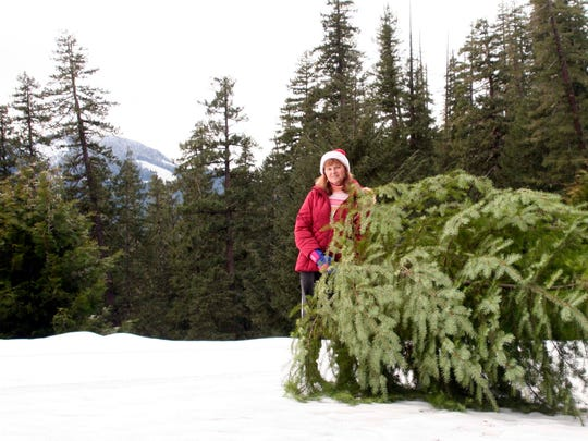 Permits go on sale the day after Thanksgiving to cut your own Christmas tree in the Willamette National Forest.