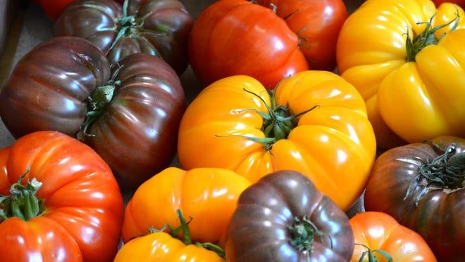 Yellow, orange, red and purple heirloom tomatoes.
