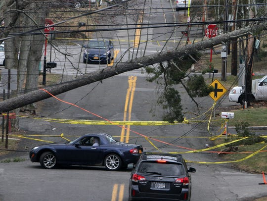 Motorists look for another way around a large tree