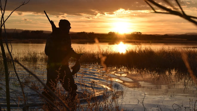 Karl Malcolm carries a wigeon duck back to the blind as the sun rises over a marsh on the Rio Grande River south of Albuquerque, N.M.