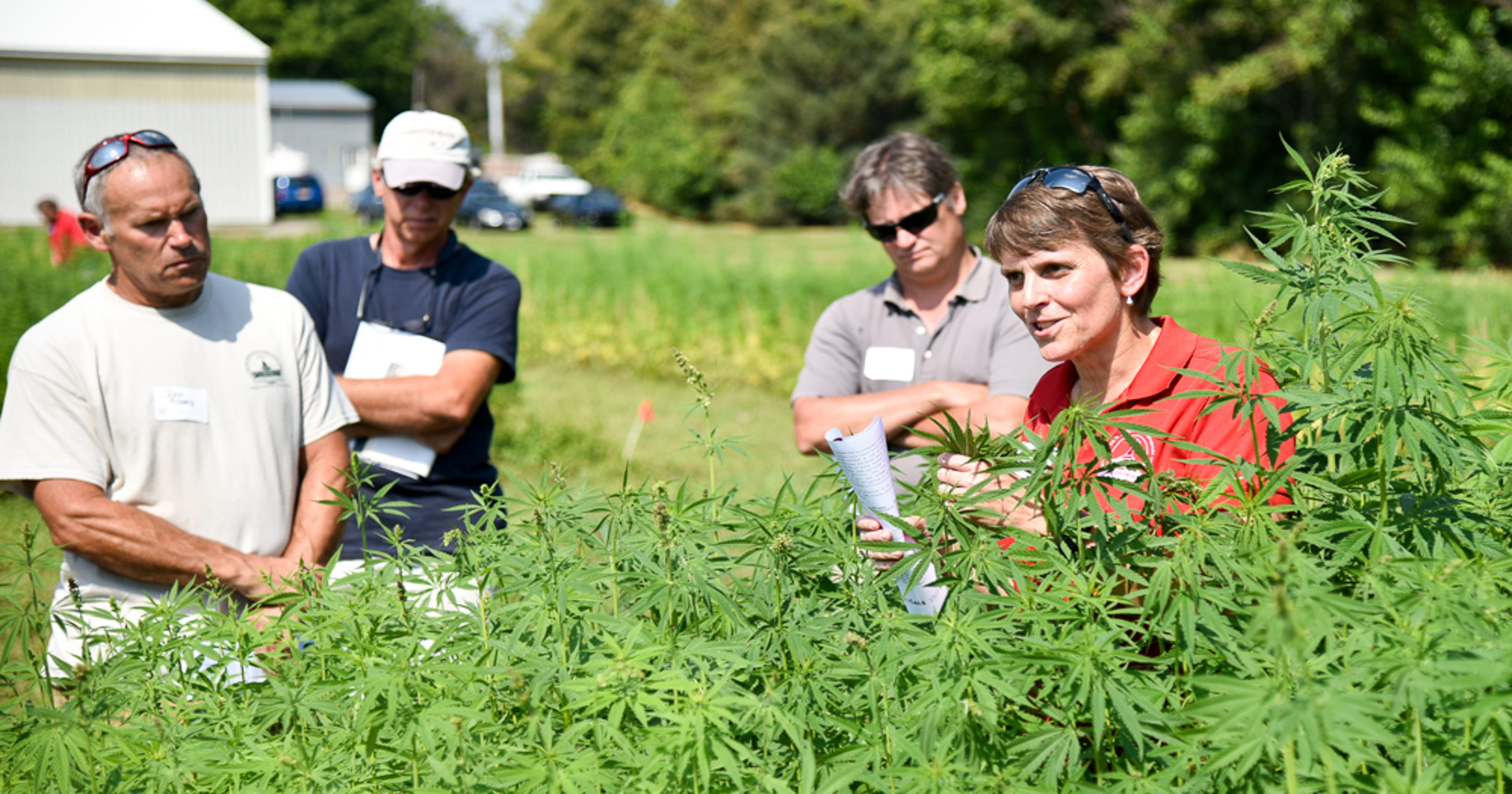 New York hemp farmers foresee big economic benefits