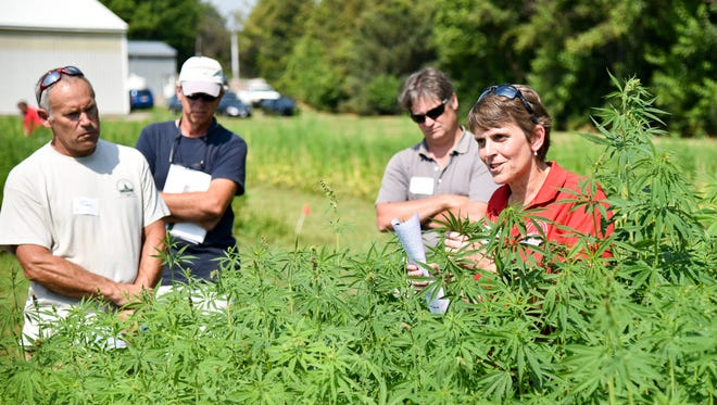 Christine Smart of Cornell University's Hemp Research Team in the College of Agriculture and Life Sciences talks to farmers about the experimental hemp crop being developed by the college during a presentation at the Geneva installation in August 2017.