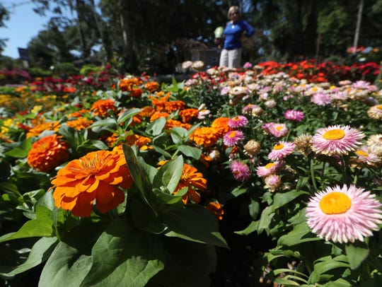 People shop the rows of plants and flowers at Tallahassee