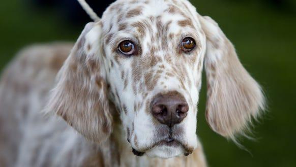 Can Dogs Hurt Their Teeth On Bones