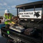 Help monitor sea turtles