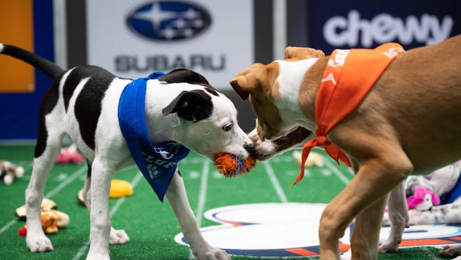 """""""Puppy Bowl XVII"""" airs at 2 p.m. Sunday on Animal Planet and the new Discovery+ streaming service."""