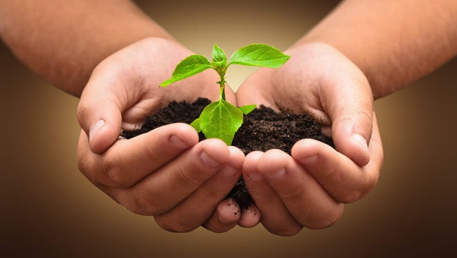 Planning your garden will help in the growth and development of your plants.