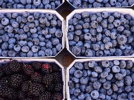 Summer months are the harvest season for blueberries