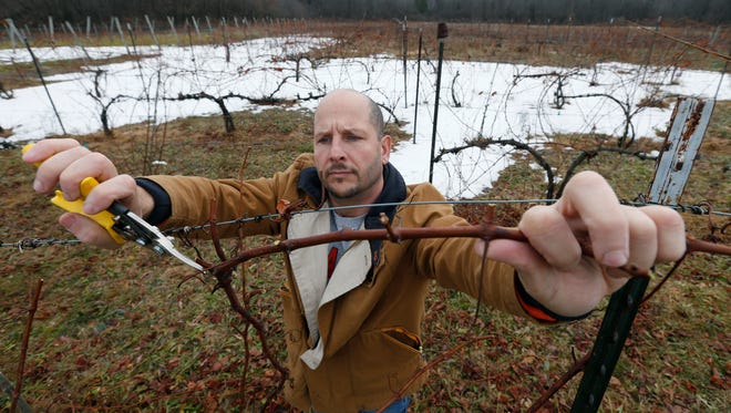 Owner Adam Mesiti prunes vines at Five Sons Winery and Brewery in Sweden, which is in battle with the town regarding a new local law that could pass and affect its business.