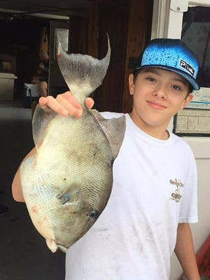 Gray triggerfish, like this one caught aboard Fort Pierce Lady party boat out of Fort Pierce City Marina,  are in large schools on Treasure Coast offshore reefs this week.