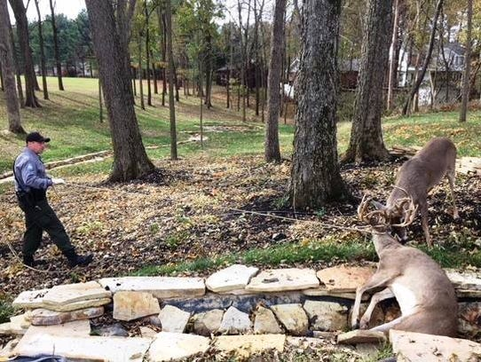 Conservation agent Kevin Zielke used a rope to immobilize