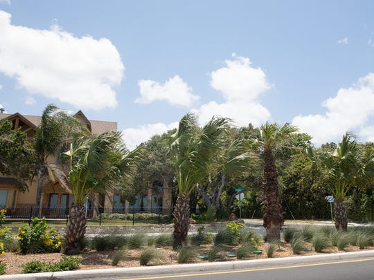 Residents who live near these palm trees that were recently planted in the median along Ocean Drive complained during a City Council meeting on Tuesday, June 12, 2018, that the new greenery is attracting more pests to their homes in Corpus Christi. They also complained the trees block the views of the Corpus Christi Bay.