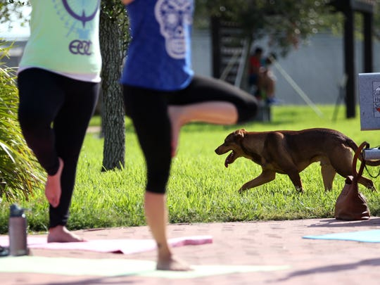 People participate in a DOGA class, or yoga with dogs,