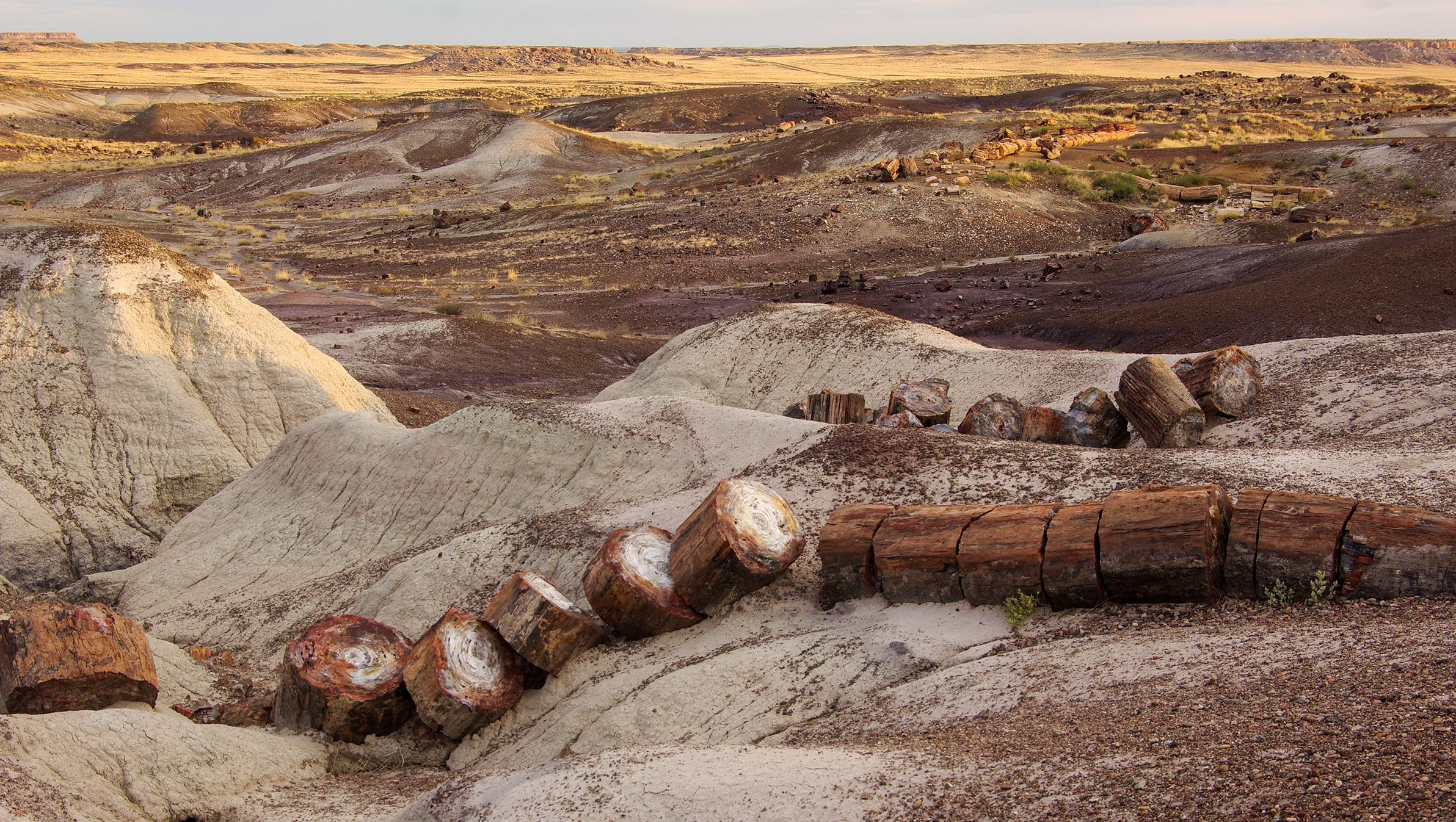 Petrified Forest National Park: 10 tips for your visit