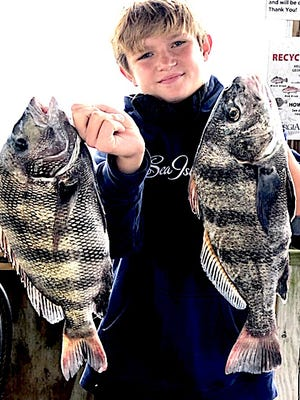 A young angler shows a sheesphead (left) and black drum he landed recently.  The two species look very much alike.