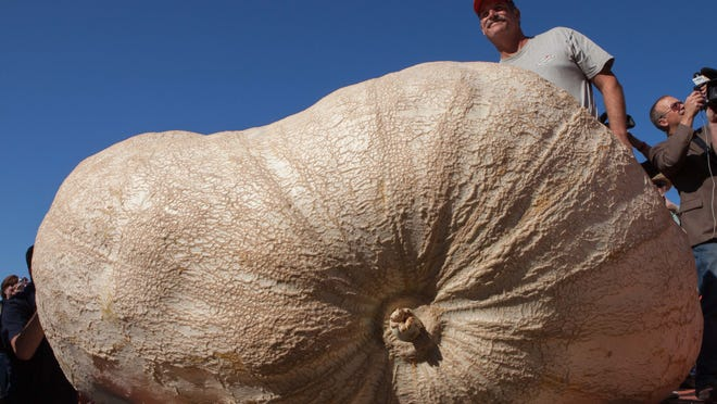 John Hawkley poses on stage with his pumpkin at the 41st Annual Safeway World Championship Pumpkin Weigh-Off  in Half Moon Bay, Calif., Monday, Oct. 13, 2014. Hawkley won with a 2,058 lb. pumpkin and set a new North American record.