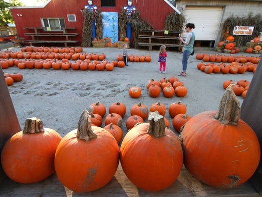 Families search the Pumpkin Patch for the perfect gourd