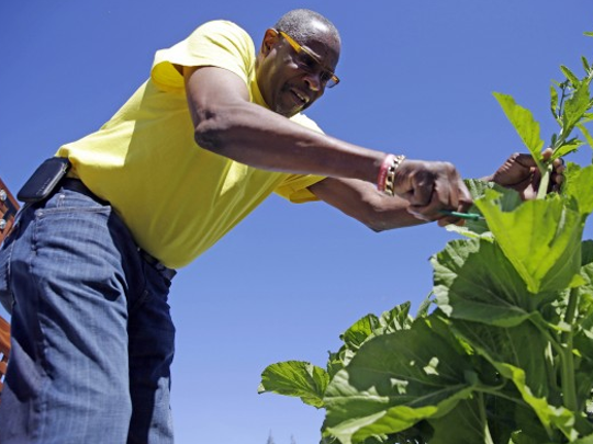 Dusty Baker tends to a plant in his garden.