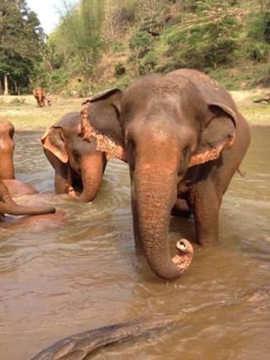 636104911431165007-Elephants01.jpg