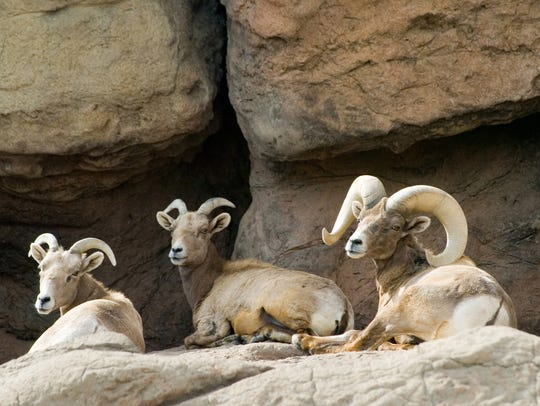 Parts of Arizona's sheep range, such as the Tinajas
