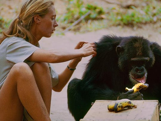 """Jane"" is a documentary about Jane Goodall."