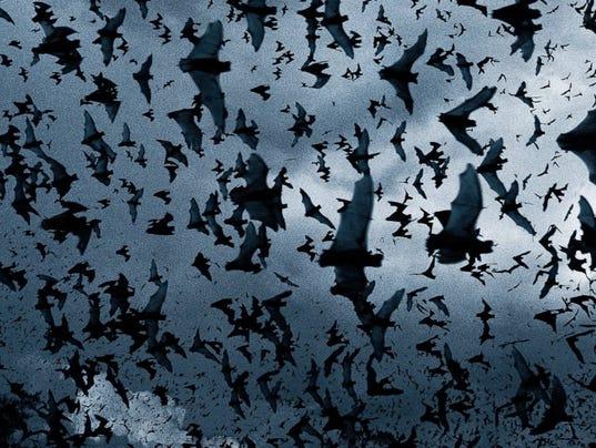 -Bat-Swarm1.jpg