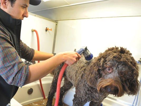 636270038012234936-Dog-grooming.jpg