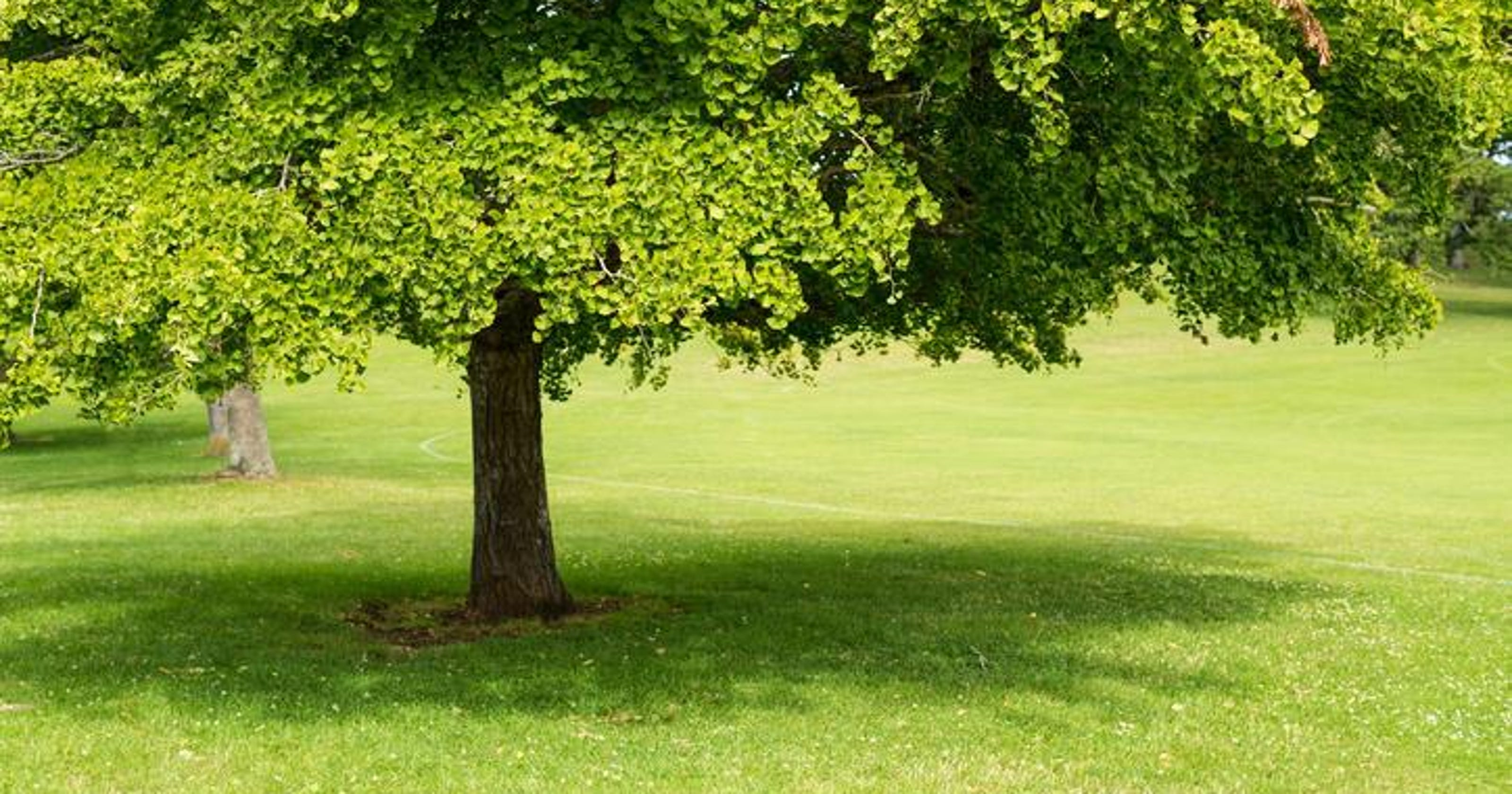 Dr. Dirt: Shade trees and frog problems