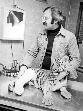 1976: Dr. Jerald Schreiber inspects an X-ray of Albert, a bengal tiger cub who broke his leg.