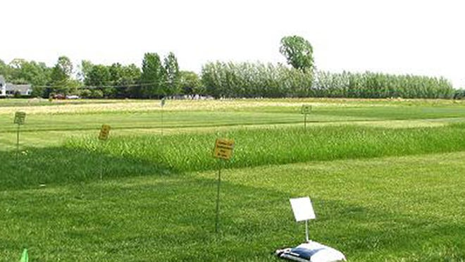 A turf demonstration site at the Snyder Research and Extension Farm in Pittstown. Photo courtesy of Snyder Research and Extension Farm