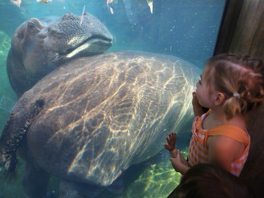Emma Sebastian, 5, of Lebanon views the two new hippos