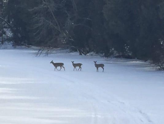636547422626571787-Gary-Robinson-deer-on-river-1-.JPG