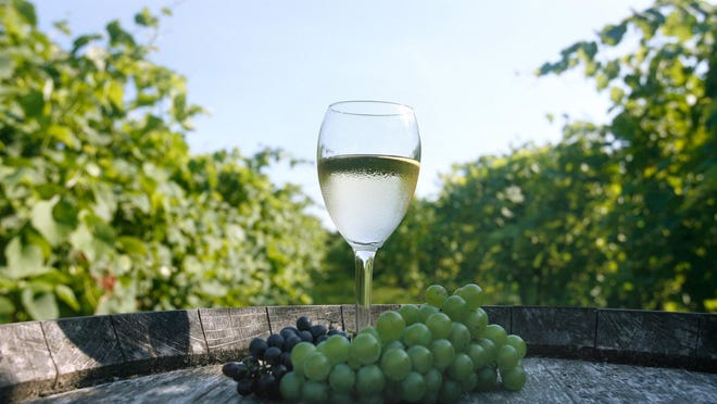 Set on lush farmland along the Sakonnet River, Greenvale Vineyards has been producing wines since 1983. Greenvale welcomes volunteers to help pick grapes during harvest.