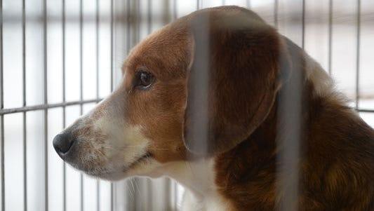 A dog awaits adoption at HELP the Animals.