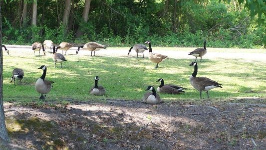 "The official start of ""hunting season"" opens with a 30-day early goose waterfowl season the month of September."