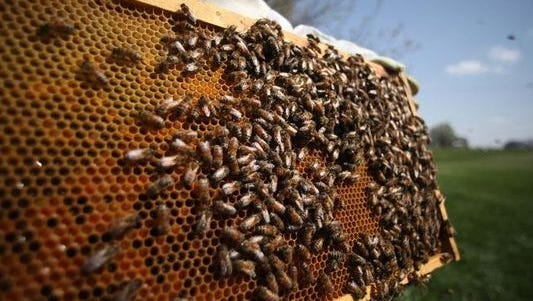 A hive of bees was stolen from Johnston last month. Police say the bees and hive are valued at $200.