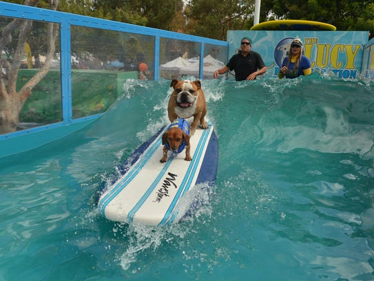 Image result for Lucy Pets Gnarly Crankin' K-9 Wave Maker float