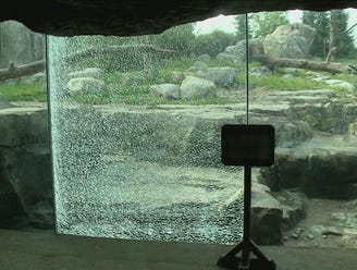 Grizzly bear shatters glass at Minnesota Zoo