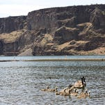 A health advisory has been lifted at Lake Billy Chinook near Madras after algae, toxin levels drop.
